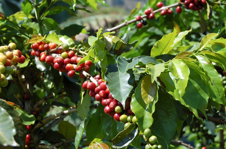 utz-coffee-2.jpg
