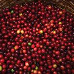 Saveurs, fonctionnalité utilisation du café carburant | 2017-03-15