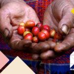 SCA lance une nouvelle conférence sur le développement durable Avance au Guatemala