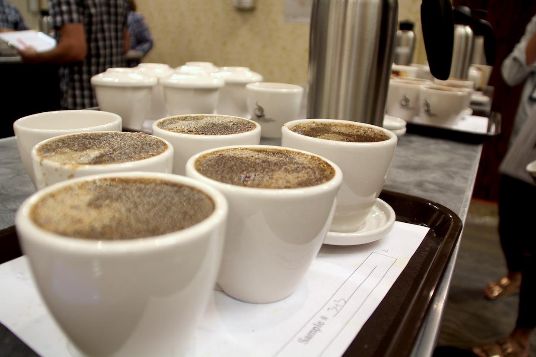 coffee-cupping-samples.jpg