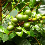 WCR lance un programme de certification de premier ordre pour les vendeurs de semences