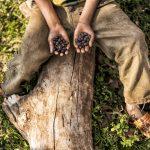 La maitrise des espèces de café silvestre est actuellement mise à jour dans le journal quotidien du café par Roast Magazine