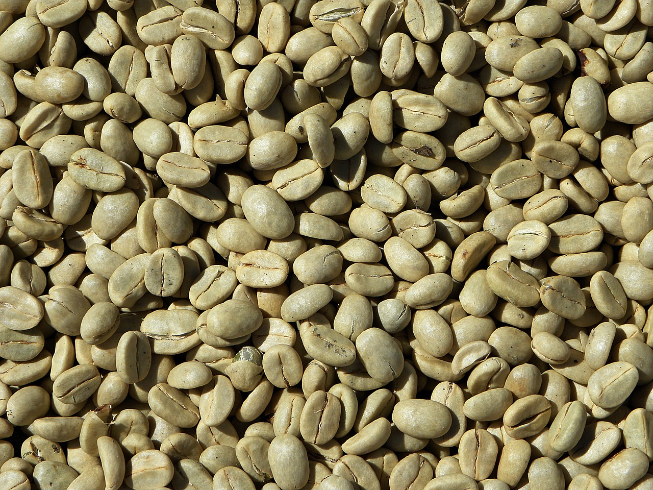 Café vert de l'Inde