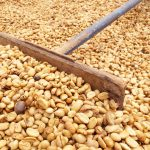 Des prix équitables sont désespérément nécessaires pour mettre fin à la pauvreté des agriculteurs caféiculteurs quotidiens par Roast Magazine