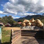 Les marchands de café Red Fox investissent au Mexique avec le bureau d'OaxacaDaily Coffee News by Capsules Café