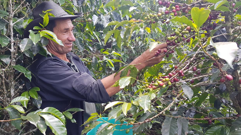 Producteur de café en Colombie