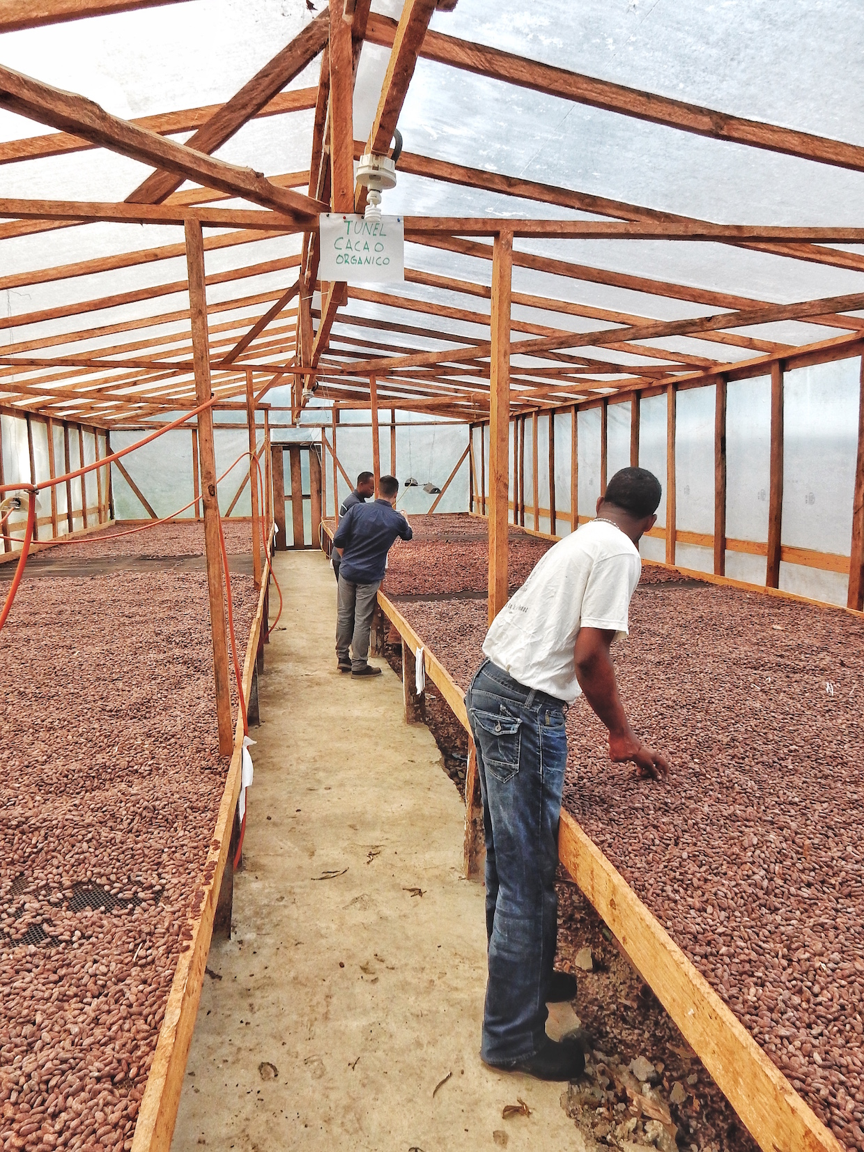 lits de séchage de cacao