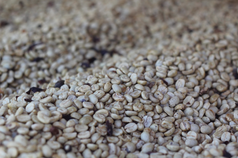 café en parchemin
