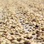Enquête auprès des producteurs de café en Amérique du SudDaily Coffee News by Capsules Café