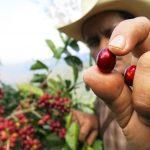 Rainforest Alliance dévoile un nouveau programme de certification de grande envergureDaily Coffee News by Capsules Café