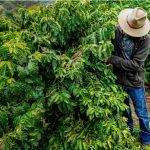 Le producteur de café californien Frinj s'associe à deux organismes à but non lucratif du secteur agricole - Daily Coffee News by Capsules Café