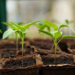 Trois campagnes de soutien à l'agroforesterie pour les petites exploitations de café - Daily Coffee News by Capsules Café